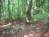 Skog vid Stenshuvud Nationalpark